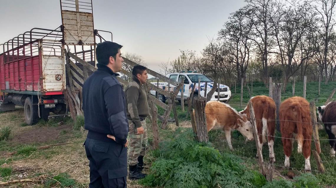 Esclarecen robo de ganado