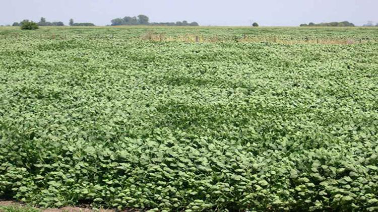 Nueva infracción por agroquímicos